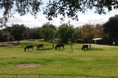 les-ânes-de-Brousses